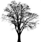 Masked Images: tree, big, silhouette