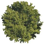 Masked Images: tree, top view