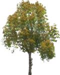 Masked Images: 10 Deciduous trees