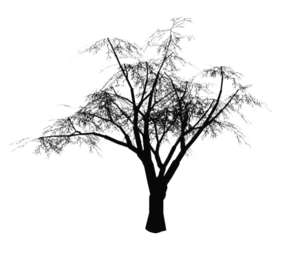 black & white tree for elevations