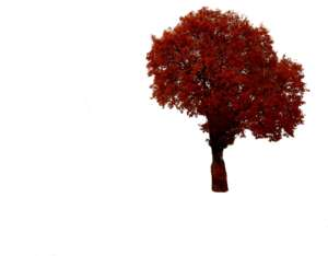 Autumn tree in red