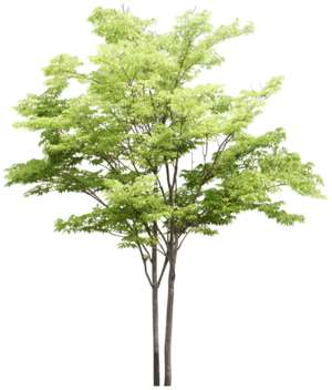 new green tree