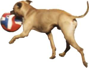 Dog with ball in snout