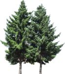 Masked Images: 2 fir trees