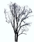 Masked Images: tree without leaves, winter