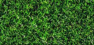 Textures: Grass - lawn - meadow
